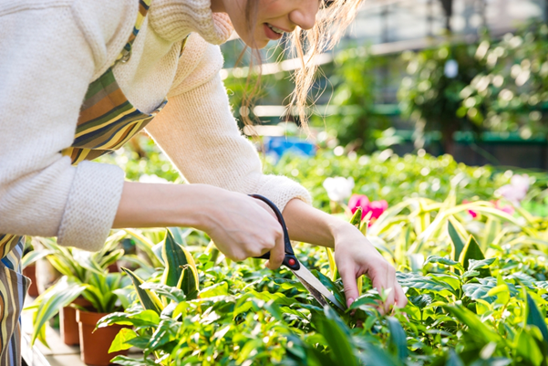 Je tuin winterklaar maken