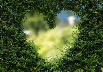 Waarom meer groen in de tuin je goed zal doen!