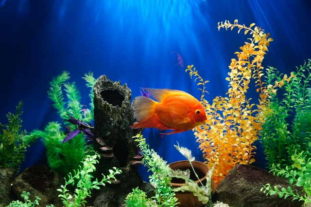 Aquarium verlichting: Licht uit, LED aan…